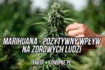 Zalety palenia marihuany