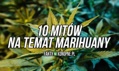 mity i fakty o marihuanie