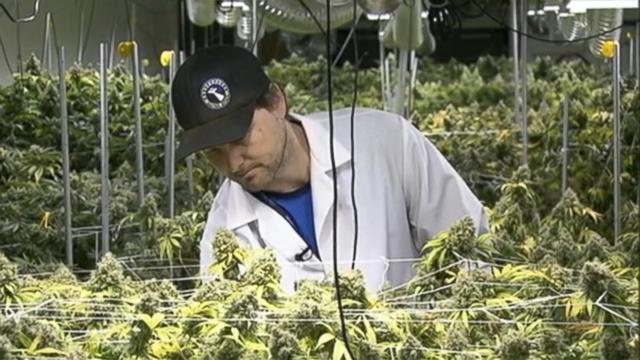 ann_marijuana_job_fair_wg