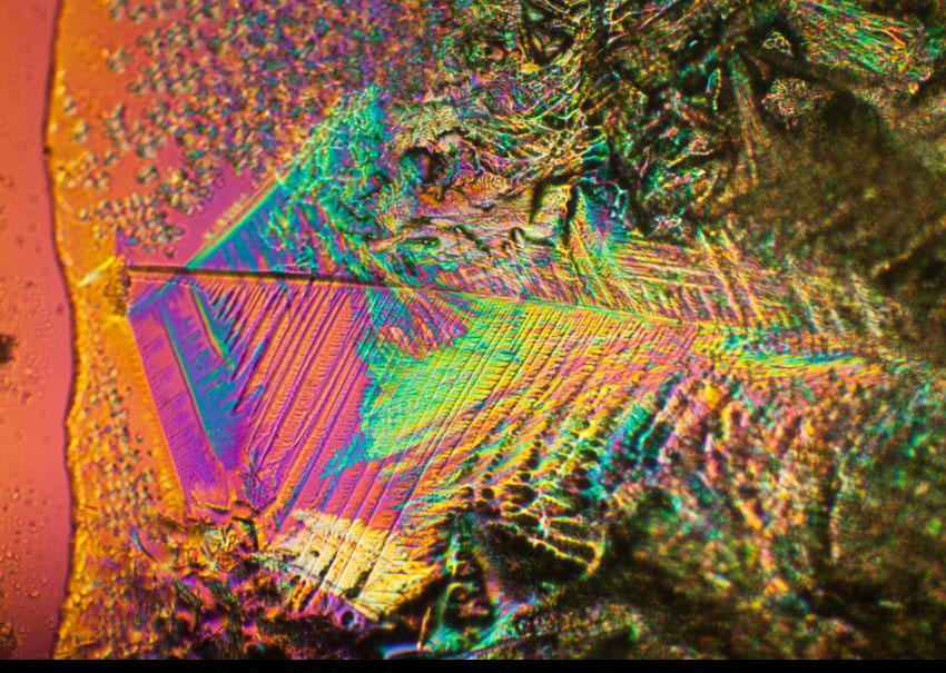 marihuana pod mikroskopem18