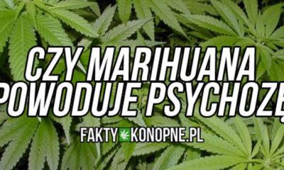 Czy marihuana powoduje psychozy
