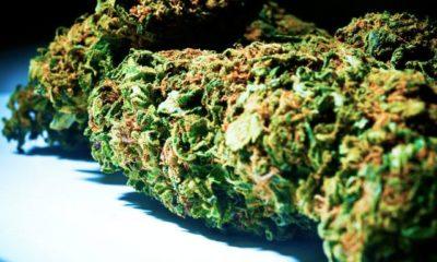 życiowe triki palacza marihuanyjpg