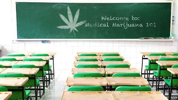 medyczna-marihuana-szkola-studia-nauka-marihuanistyka