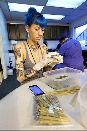 waszyngton marihuana legalizacja odmiany2
