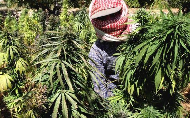 marihuana-jihad-islam