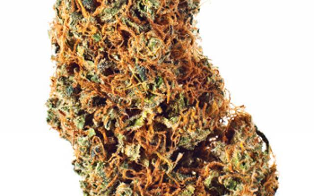 marihuana-otyłość-apetyt-lecznie