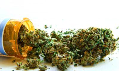 medyczna-marihuana