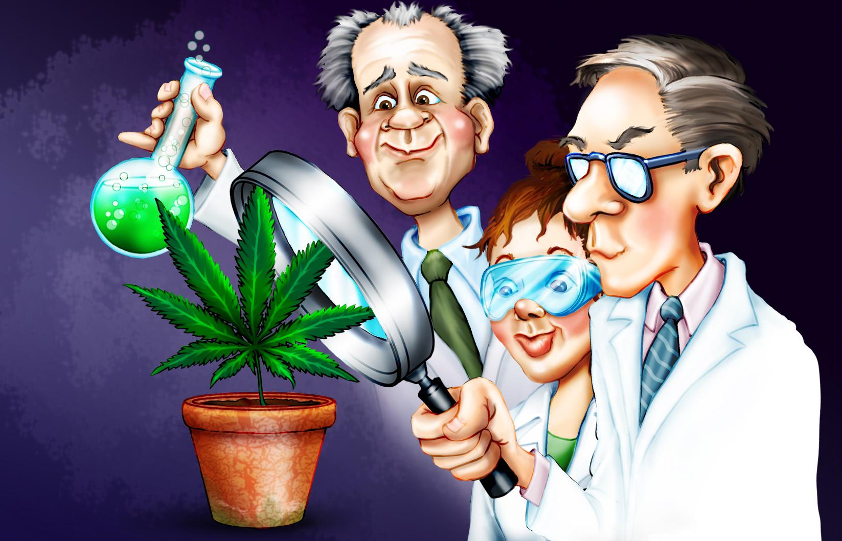 medyczna-marihuana-badania