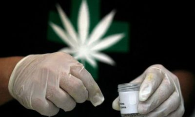 medyczna-marihuana-chile