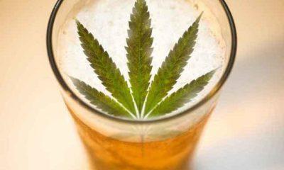 piwo-marihuana