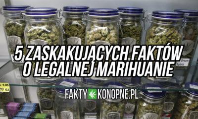 fakty-o-marihuanie