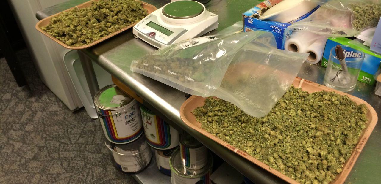 marihuana-praca