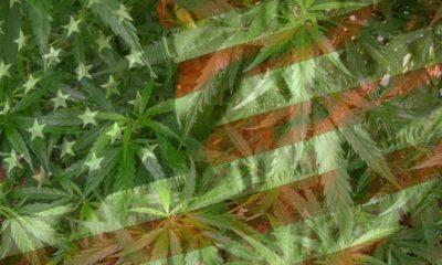 marihuana-usa