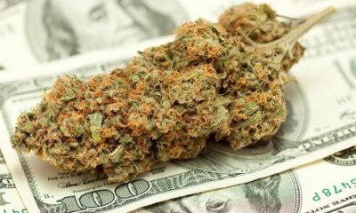 podatki-marihuana-waszyngton