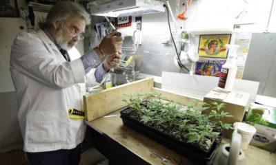 badania-nad-medyczna-marihuana