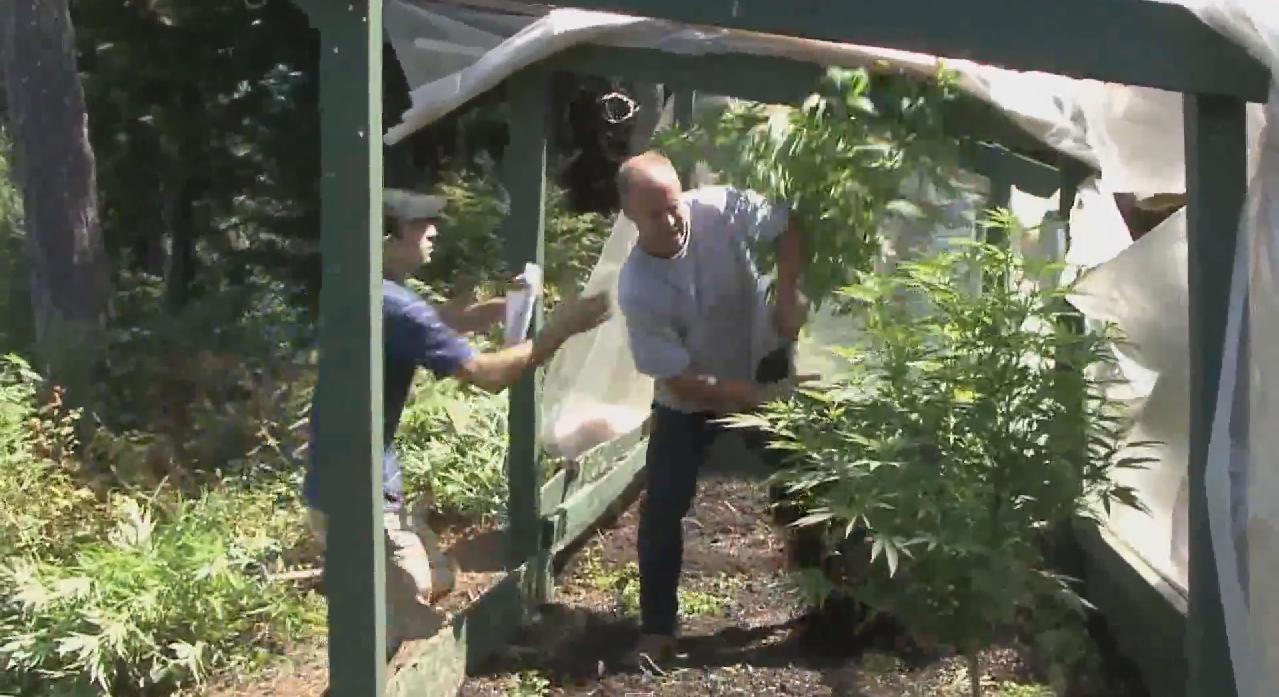 kradziez-medycznej-marihuany