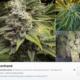 marihuana-instagram