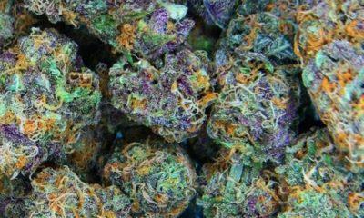 palenie-marihuany-miejsca