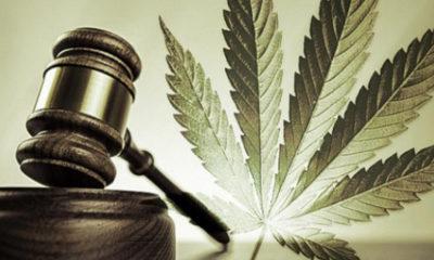 sędzia-marihuana