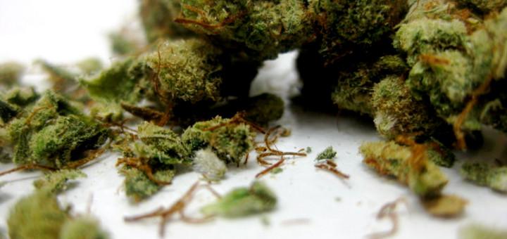 zastosowanie-medycznej-marihuany