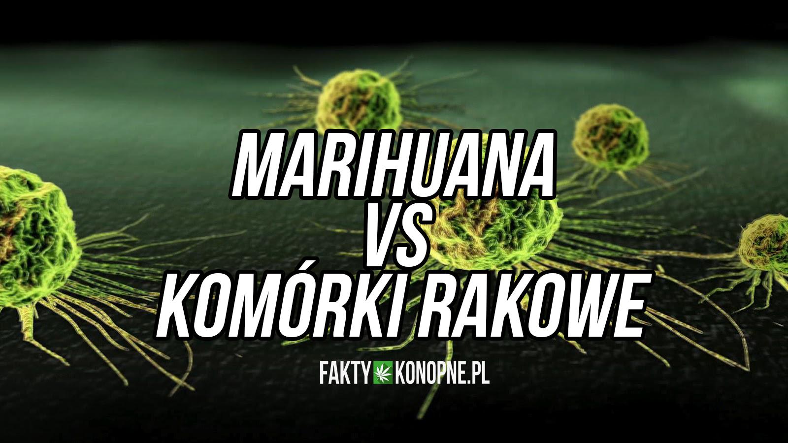 marihuana-leczy-raka