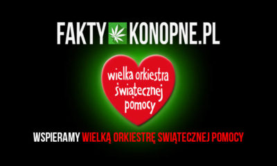 fakty-konopne-wosp