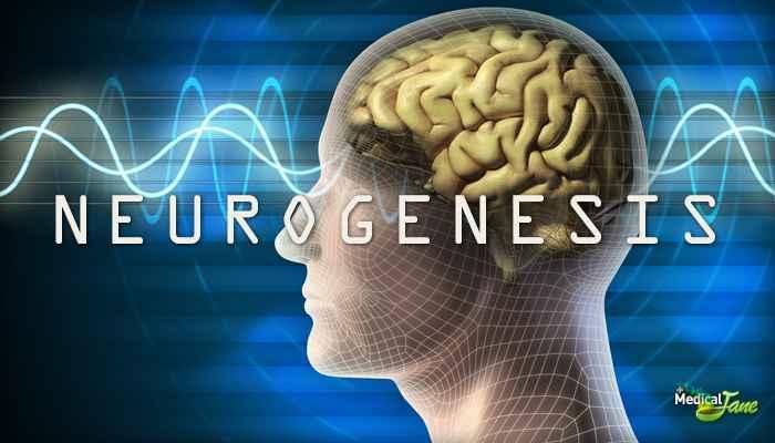 marihuana-neurogeneza