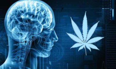 pozytywny wpływ marihuany na mózg