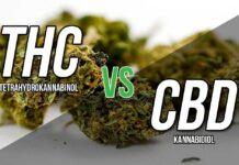 różnice-thc-cbd