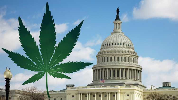 Waszyngton D.C jest czwartym stanem, który zalegalizował marihuanę do celów rekreacyjnych