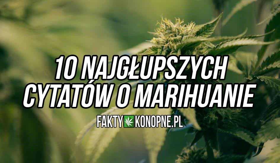 10 najgłupszych cytatów o paleniu marihuany