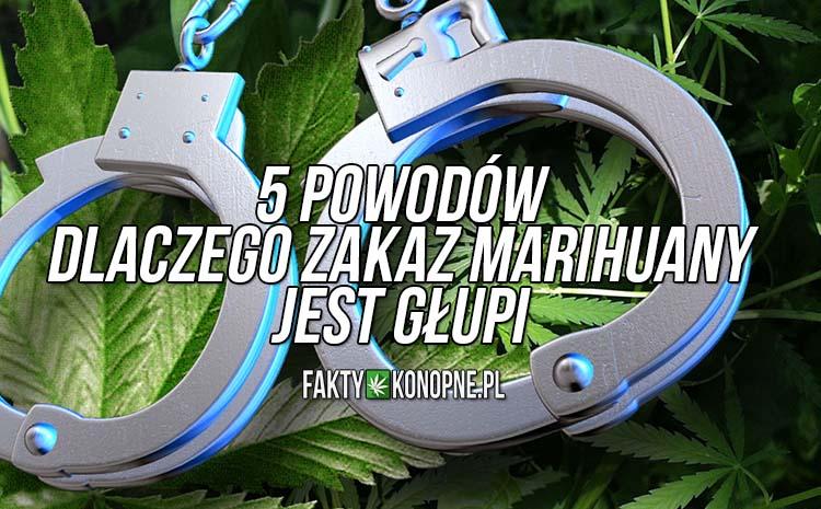 5-powodow-dlaczego-zakaz-marihuany-jest-glupi