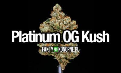 platinum-og-kush