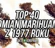 top 40 odmian marihuany 1977 roku