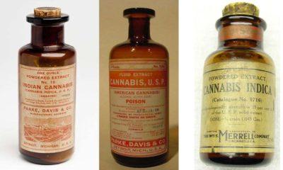 Medyczna marihuana z XIX i XX wieku