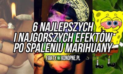 6-typow-haju-faz-efektow-po-spaleniu-marihuany
