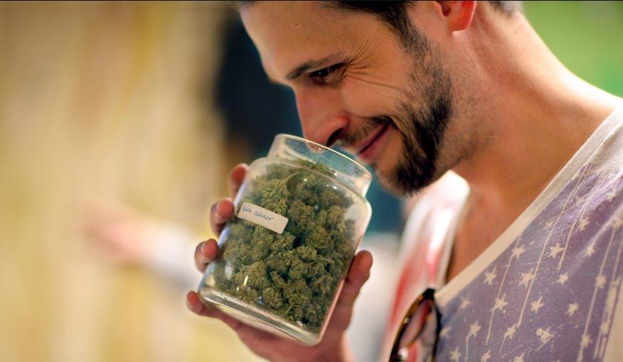 krytyk-marihuany