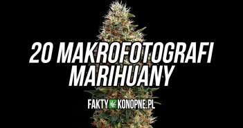 marihuana-makro-zdjecia