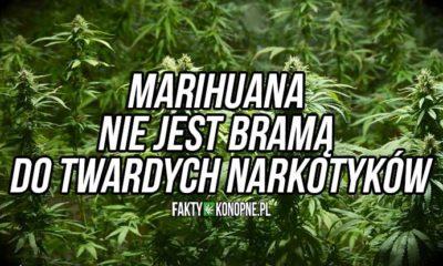 marihuana-nie-jest-brama-do-twardych-narkotykow