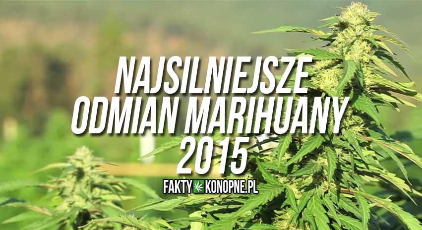 najmocniejsze odmiany marihuany 2015