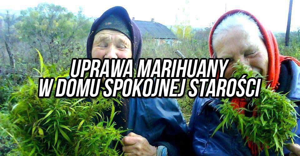 uprawa-marihuany-w-ganskim-domu-spokojnej-starosci