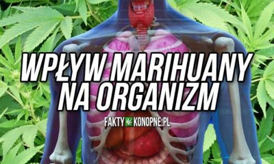 wplyw-marihuany-na-organizm
