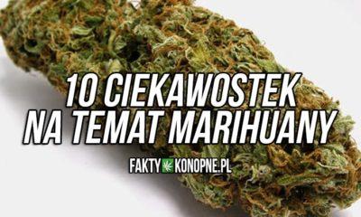 Ciekawostki na temat marihuany