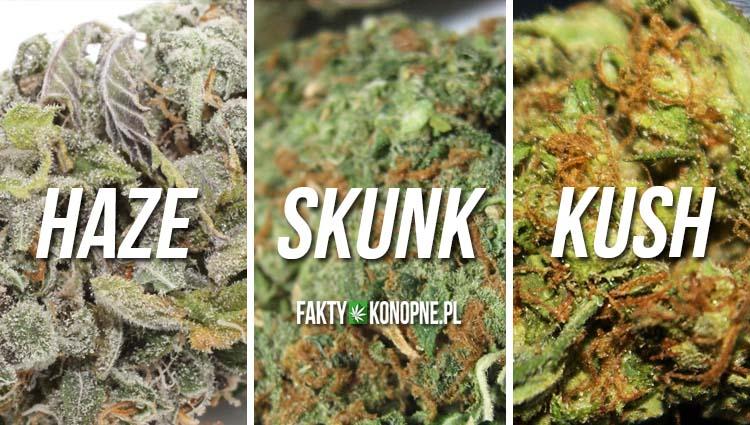roznice-kush-haze-skunk-marihuana