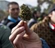 mezczyzna trzymajacy topa marihuany podczas marszu legalizacyjnego w chile
