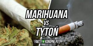 Marihuana vs Tytoń
