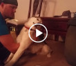 Pies najadl sie ciasteczek z marihuana