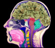 marihuana-hipokamp