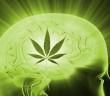 Marihuana podnosi poziom ilorazu inteligencji u okazjonalnych uzytkownikow