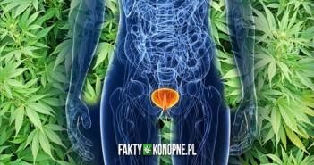 Marihuana zmniejsza ryzyko zachorowania na raka pecherza moczowego